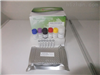 豚鼠纤溶酶抗纤溶酶复合物(PAP)ELISA分析试剂盒